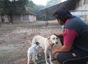dog feeding goat01