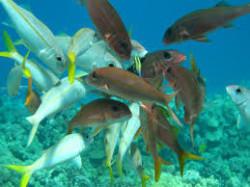 fish-meen01