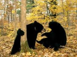 bears04