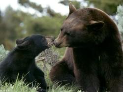bears05