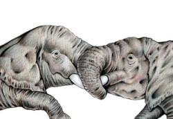 elephant02