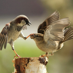two-sparrows04