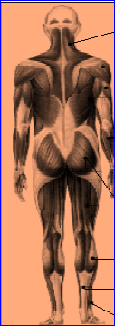 anatomy01