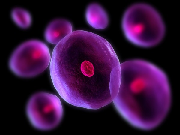 cells01