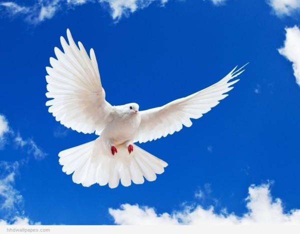 bird flying01