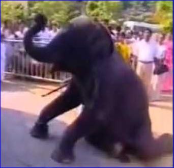 worship-of-elephnant