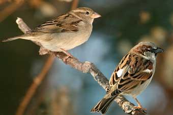 sparrow78
