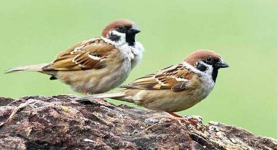 sparrowa79