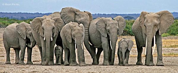 elephant-family08