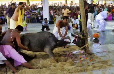 மாட்டுக்கறி உண்ட பிராமணர் :bhramins_beef