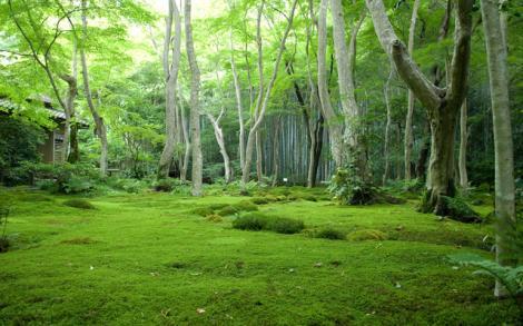 காடு - kaadu_forest
