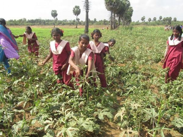 மாணிக்கவாசகர் பள்ளி, வேளாண்கல்லூரி களப்பணி01 :manickavasagampalli_agricollege01