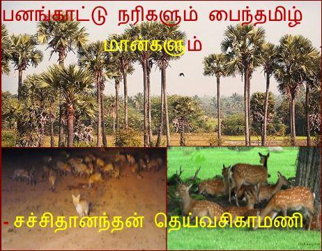 தலைப்பு-பனங்காட்டு நரிகளும் மான்களும் : thalaippu_narikalummaankalum