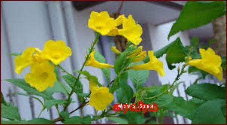 பூ, கரவீரம்- karaveeram
