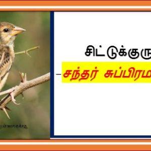 சிட்டுக்குருவி –  சந்தர் சுப்பிரமணியன்