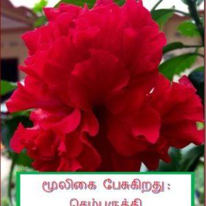 மூலிகை பேசுகிறது : செம்பருத்தி – ப.கண்ணன்சேகர்